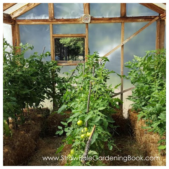 Setup A Straw Bale Garden Inside A Greenhouse For A Longer Growing Season...