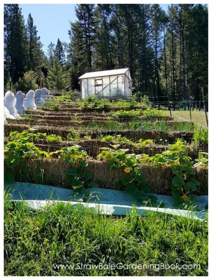 A Large Straw Bale Garden Setup For Massive Growing Potential…