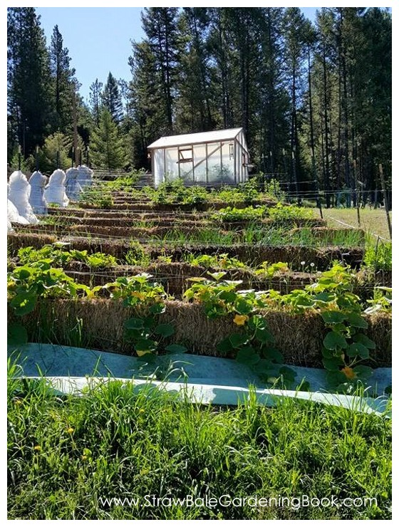 7 Really Smart Reasons To Grow YOUR Own Organic Food In A Straw Bale ...