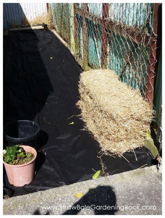 Straw Bale Garden Development...