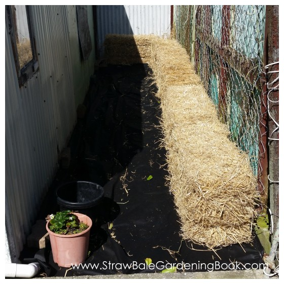 Straw Bale Garden Development...