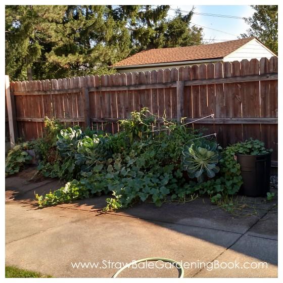 Straw Bale Garden Setup On A Driveway...