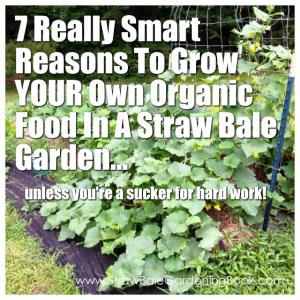 7 Really Smart Reasons To Grow YOUR Own Organic Food In A Straw Bale Garden...