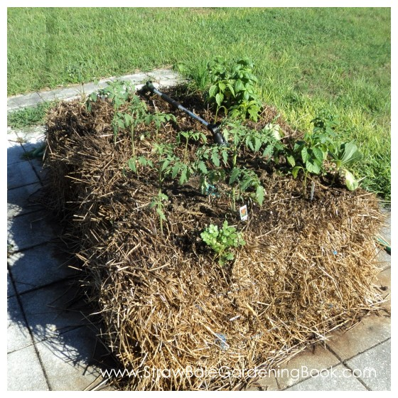Straw Bale Garden Setup On Pavers...