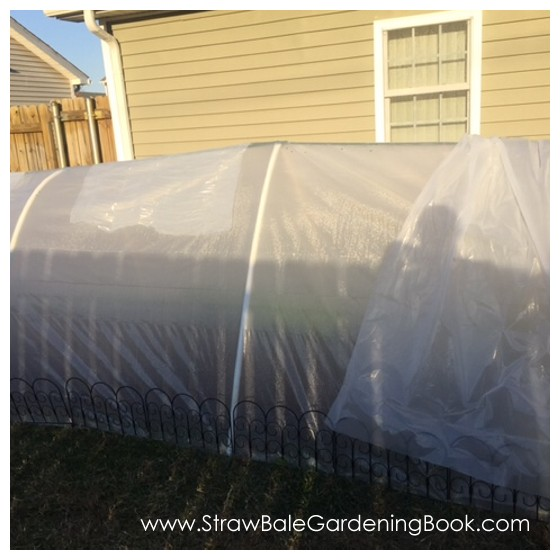 Poly Tunnel Surrounding A Straw Bale Garden...
